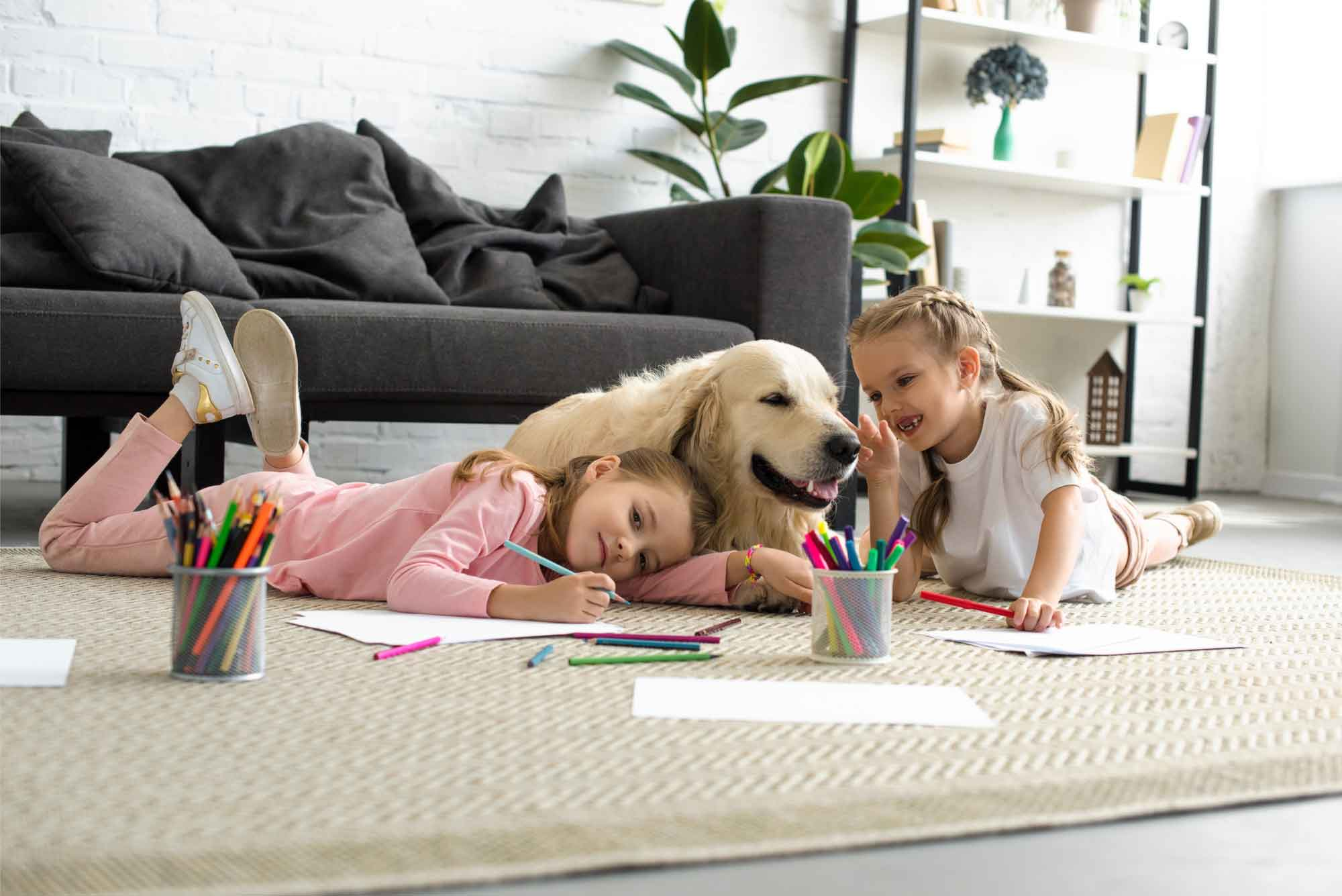 4 essentials for a happy and healthy pet